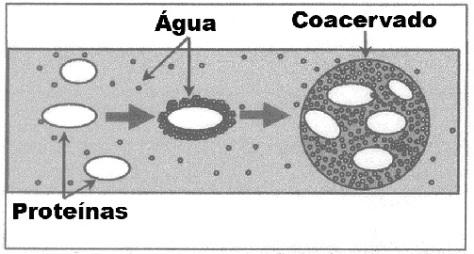 Primeiras proteínas, protegidas pelas bolhas de água.